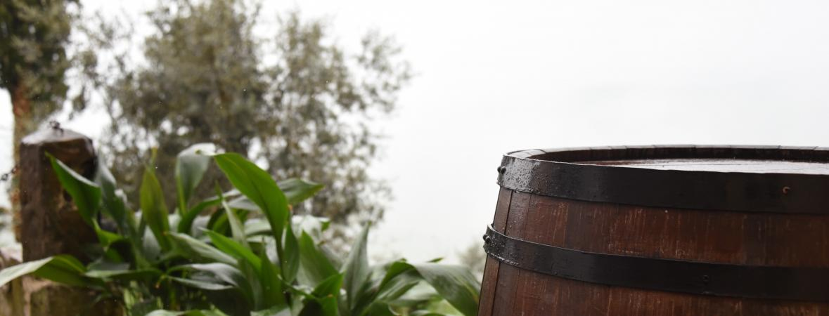 rain barrels - rain barrel next to some vegetation
