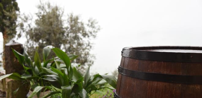 rain barrels - rain barrel next to some vegetation