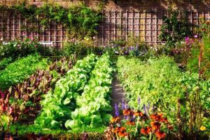 Garden Trends - growing food