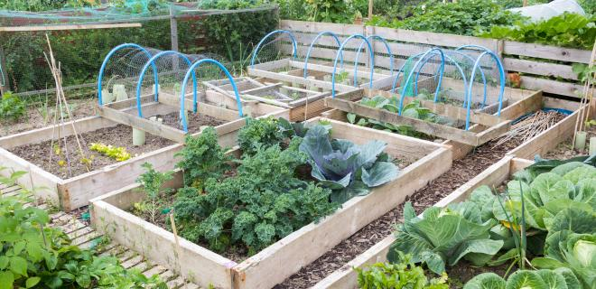 keep your garden organized