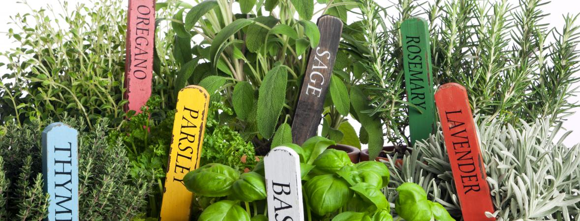 garden herbs in home