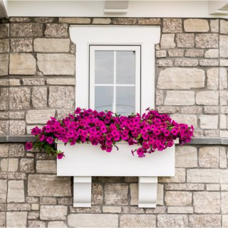 flower box with pink flowers on the exterior of a window