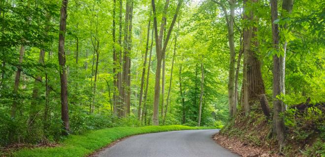 reasons to move to conowingo - susquehanna state park forest