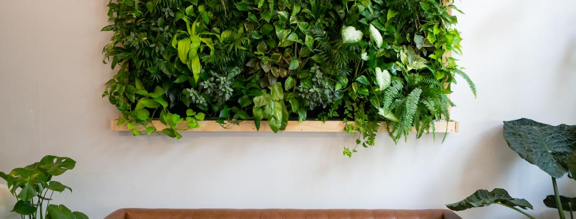 indoor vertical garden on a wall above a brown leather couch