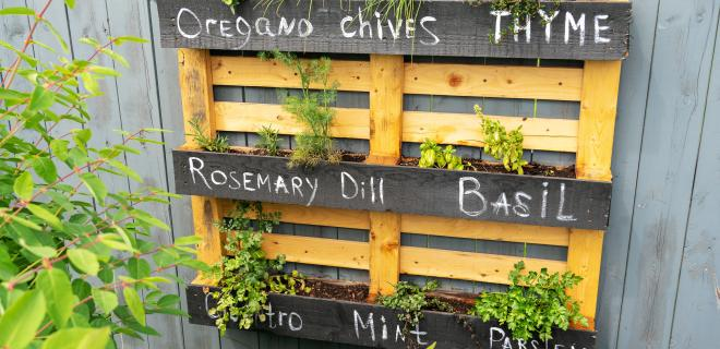 wooden pallet planter with herbs